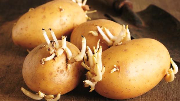 2 loại rau củ mọc mầm không những không độc mà dinh dưỡng còn tăng lên gấp bội, đừng lãng phí nó - Ảnh 1.