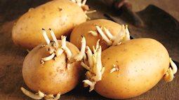 2 loại rau củ mọc mầm không hề độc hại mà dinh dưỡng còn tăng lên gấp bội luôn