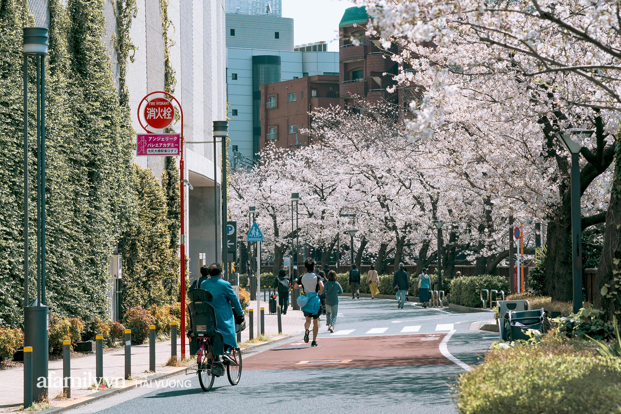 Đẹp ngây ngất cảnh tượng toàn bộ thủ đô Tokyo được bảo trùm trong sắc hoa anh đào nở sớm nhất trong 1.200 năm - Ảnh 6.