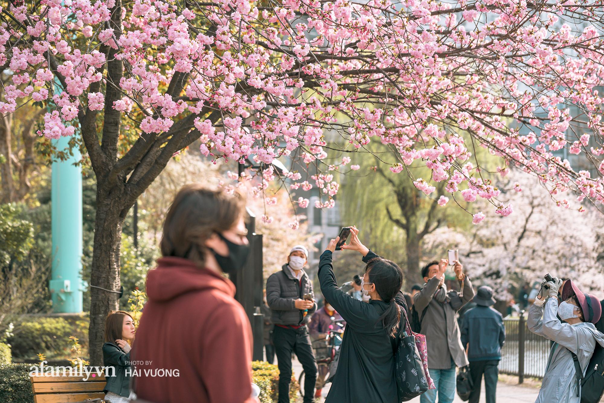 Đẹp ngây ngất cảnh tượng toàn bộ thủ đô Tokyo được bảo trùm trong sắc hoa anh đào nở sớm nhất trong 1.200 năm - Ảnh 8.