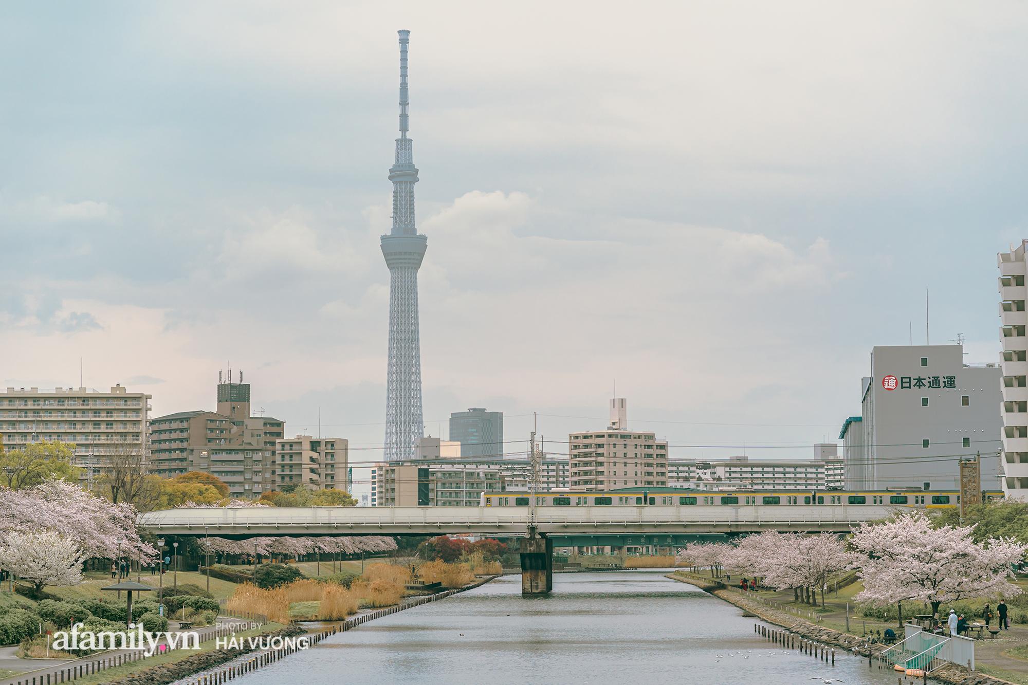 Đẹp ngây ngất cảnh tượng toàn bộ thủ đô Tokyo được bảo trùm trong sắc hoa anh đào nở sớm nhất trong 1.200 năm - Ảnh 3.