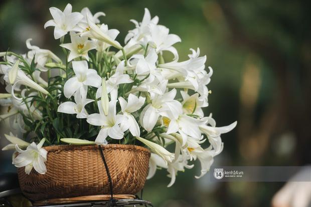 Hà Nội những ngày tháng 4, đi đâu cũng thấy bóng dáng loài hoa mỏng manh, tinh khôi và trong veo - Ảnh 3.