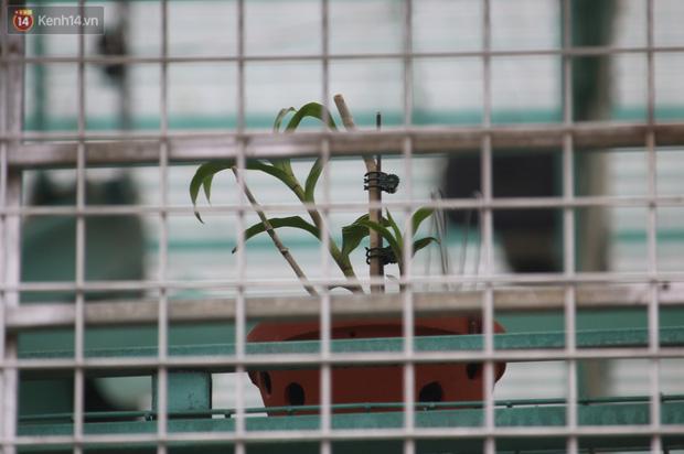 Người nhà lên tiếng sau khi chủ vườn lan đột biến ở Hà Nội bị tố ôm hàng trăm tỷ bỏ trốn: Anh ấy cũng là nạn nhân - Ảnh 2.