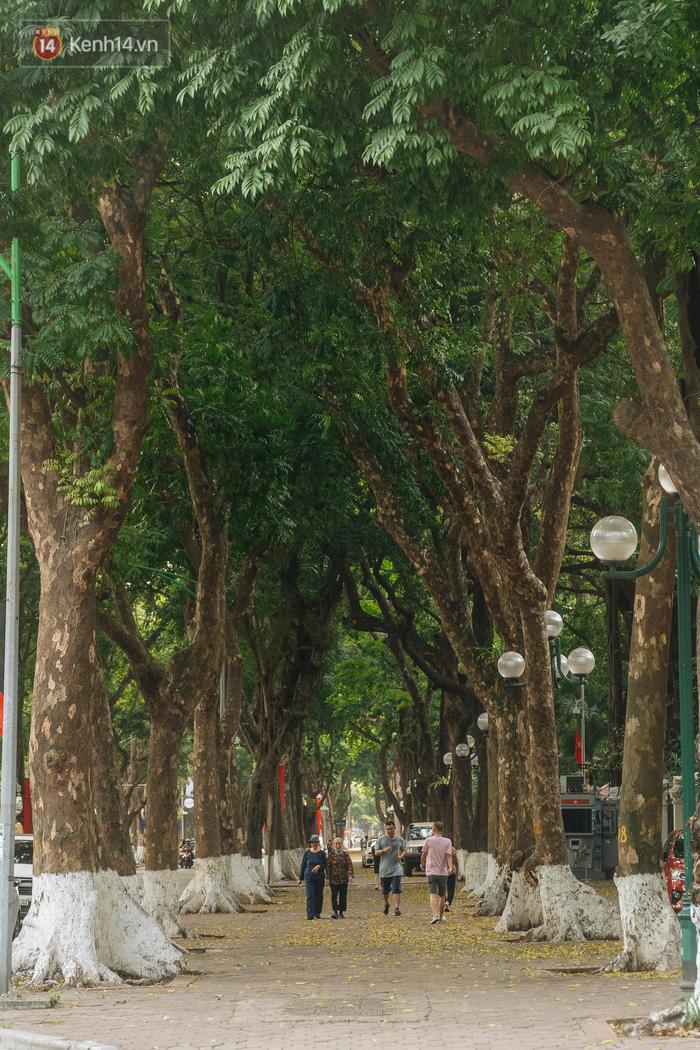 Những tuyến phố có hàng cây xanh được quy hoạch 100 năm trước ở Hà Nội giờ ra sao? - Ảnh 7.