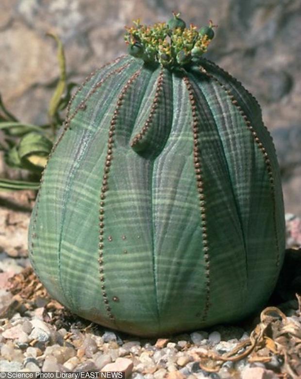 15 loài hoa sở hữu ngoại hình kỳ lạ như được hái ra từ phim viễn tưởng - Ảnh 13.