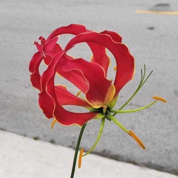 15 loài hoa sở hữu ngoại hình kỳ lạ như được hái ra từ phim viễn tưởng - Ảnh 14.