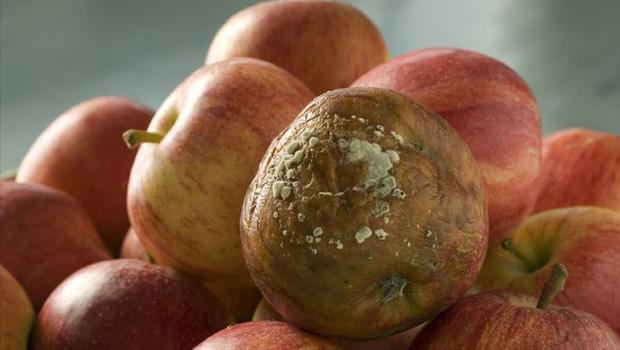 Những loại hoa quả được gọi là chất kích hoạt tế bào ung thư, rất nhiều gia đình đang ăn mỗi ngày mà không biết - Ảnh 2.