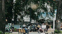 """Sài Gòn mùa hoa dầu bay """"thống trị"""" khắp phố: Giới trẻ check-in đẹp thổn thức, nhưng cô chú lao công chắc """"cực lắm à nghen""""!"""