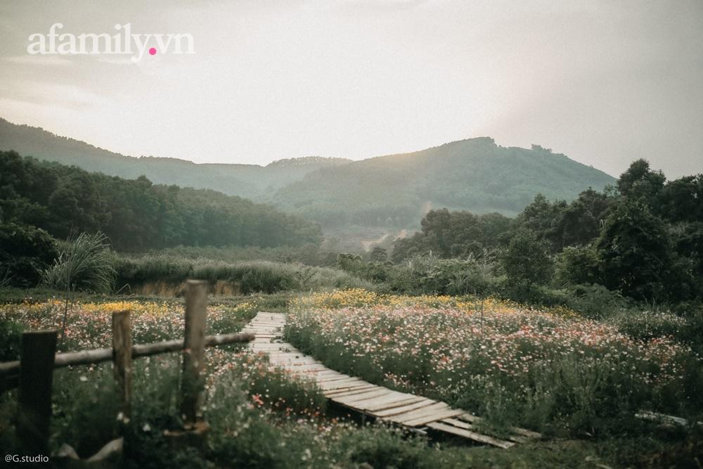 Cặp vợ chồng trẻ bỏ phố về quê xây ngôi nhà nhỏ trên mảnh đồi 2ha phủ quanh toàn hoa cỏ đồng nội như vườn Châu Âu - Ảnh 8.