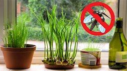 6 cách đuổi muỗi trong phòng điều hòa hiệu quả tức thì