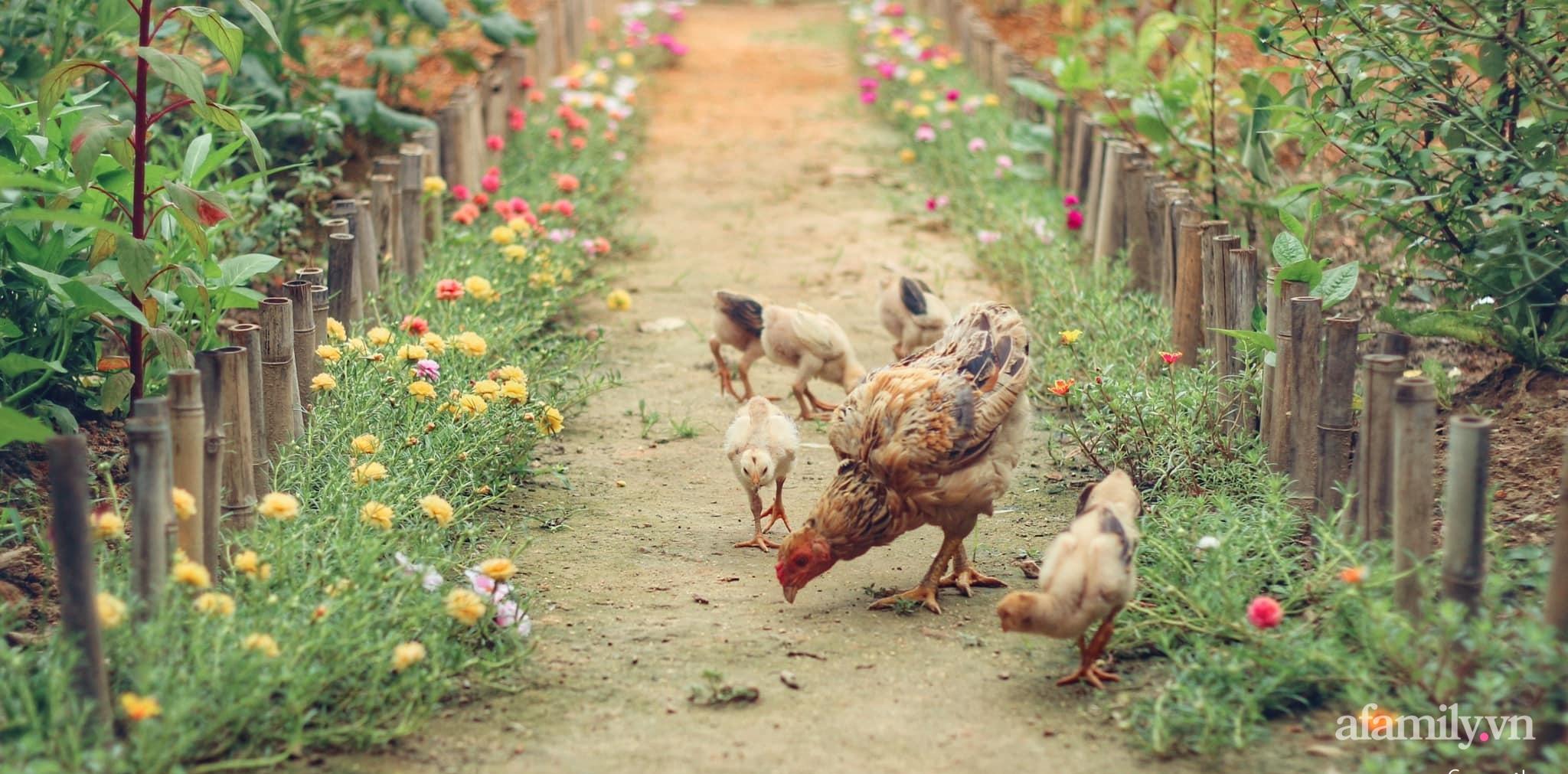 Cô gái trẻ bỏ Hà Nội phố về quê trồng rau nuôi cá, tạo không gian xanh sống cuộc đời an lành - Ảnh 1.