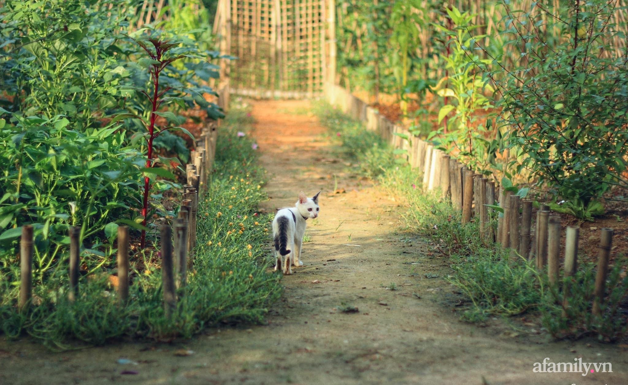 Cô gái trẻ bỏ Hà Nội phố về quê trồng rau nuôi cá, tạo không gian xanh sống cuộc đời an lành - Ảnh 2.