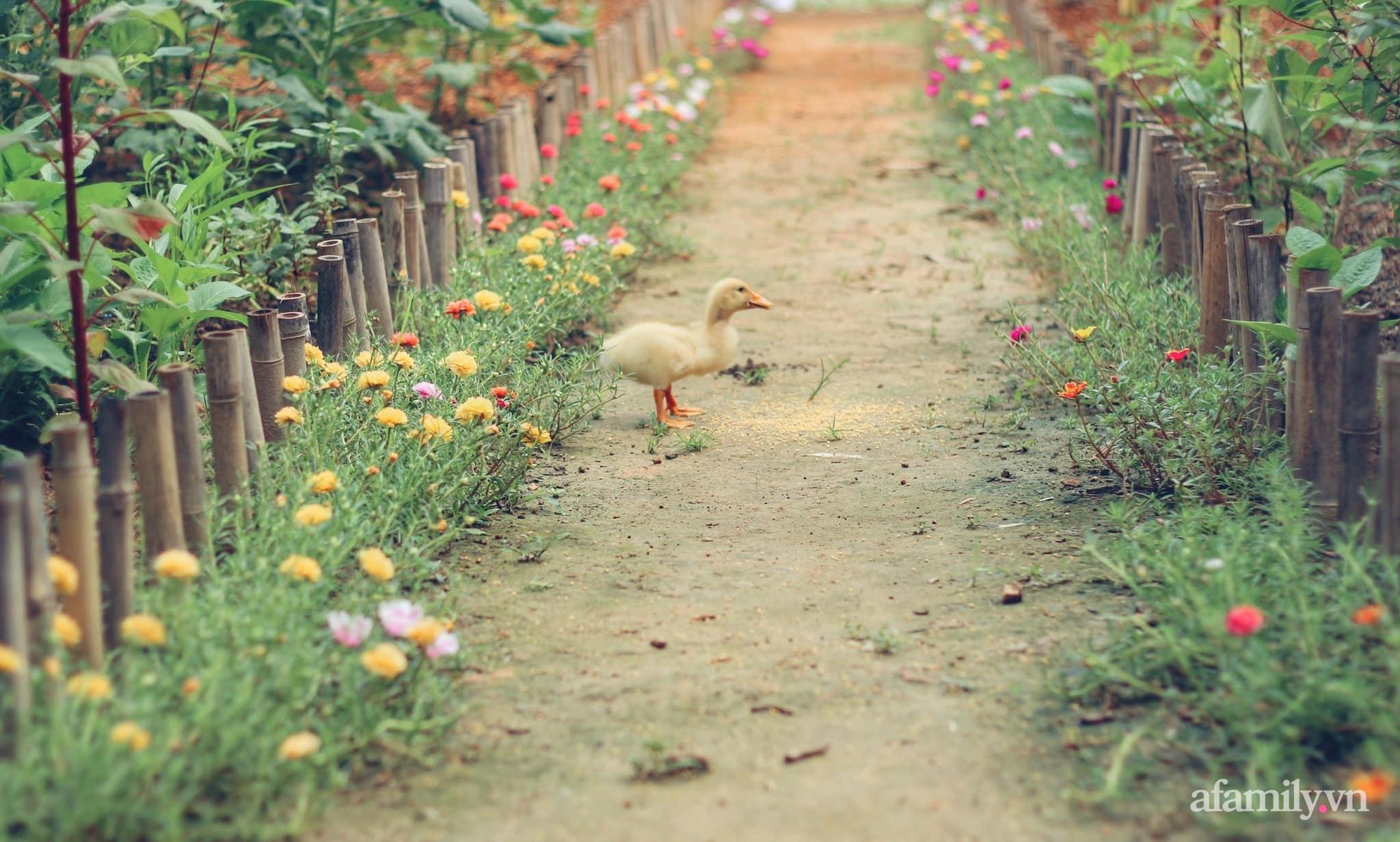 Cô gái trẻ bỏ Hà Nội phố về quê trồng rau nuôi cá, tạo không gian xanh sống cuộc đời an lành - Ảnh 3.