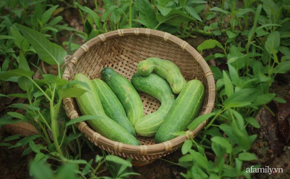 Cô gái trẻ bỏ Hà Nội phố về quê trồng rau nuôi cá, tạo không gian xanh sống cuộc đời an lành - Ảnh 20.