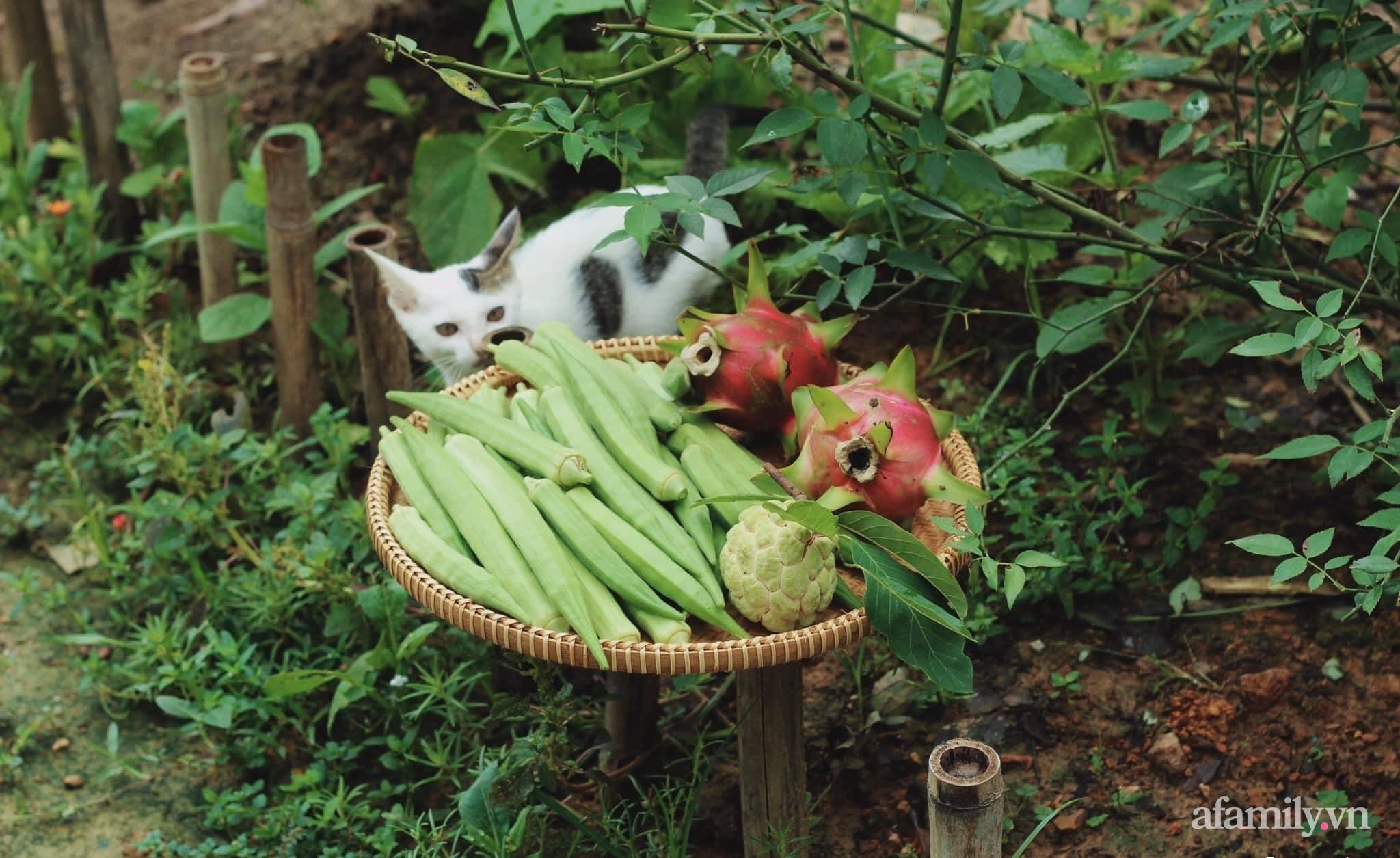 Cô gái trẻ bỏ Hà Nội phố về quê trồng rau nuôi cá, tạo không gian xanh sống cuộc đời an lành - Ảnh 9.