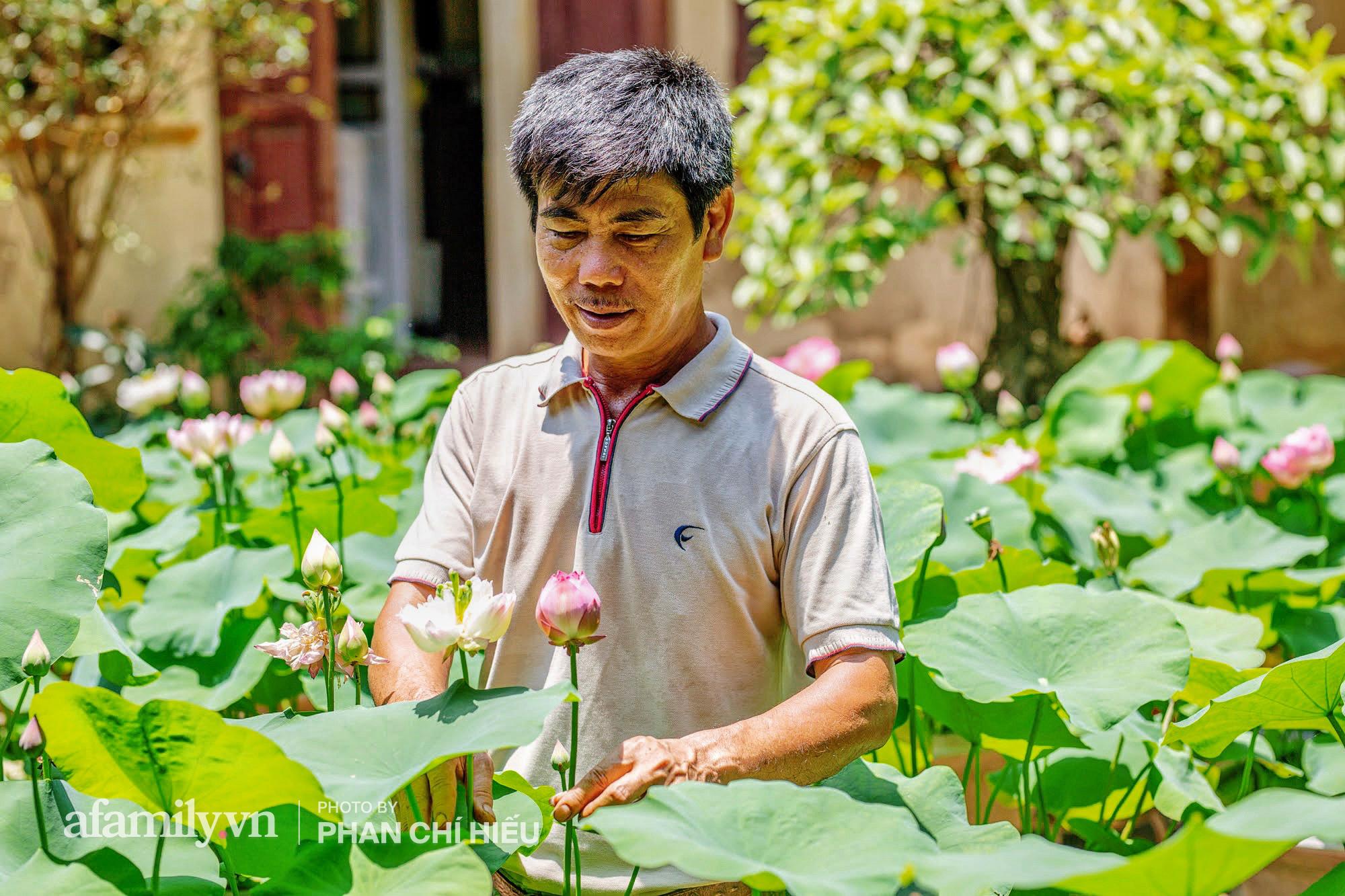 Độc đáo với thú chơi sen cung đình Huế tại Hà Nội, nở hoa tuyệt đẹp giữa ngôi nhà cổ trăm năm tuổi khiến bao người mê mẩn - Ảnh 7.