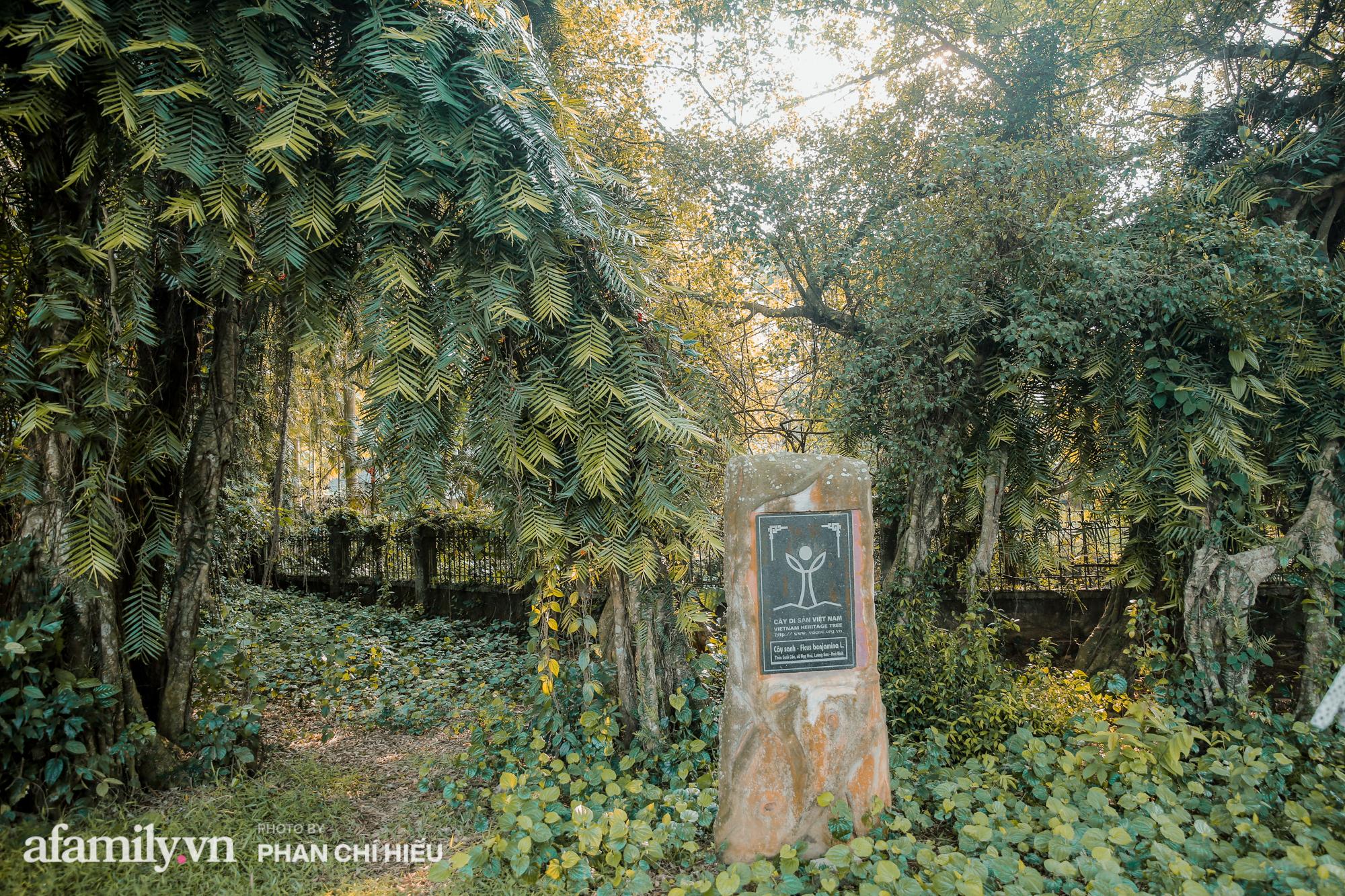 Ngôi làng độc nhất Việt Nam sở hữu chiếc cổng từ cây đại thu 800 năm tuổi, từng là bối cảnh cực ấn tượng trong những bộ phim về làng quê Việt Nam - Ảnh 8.