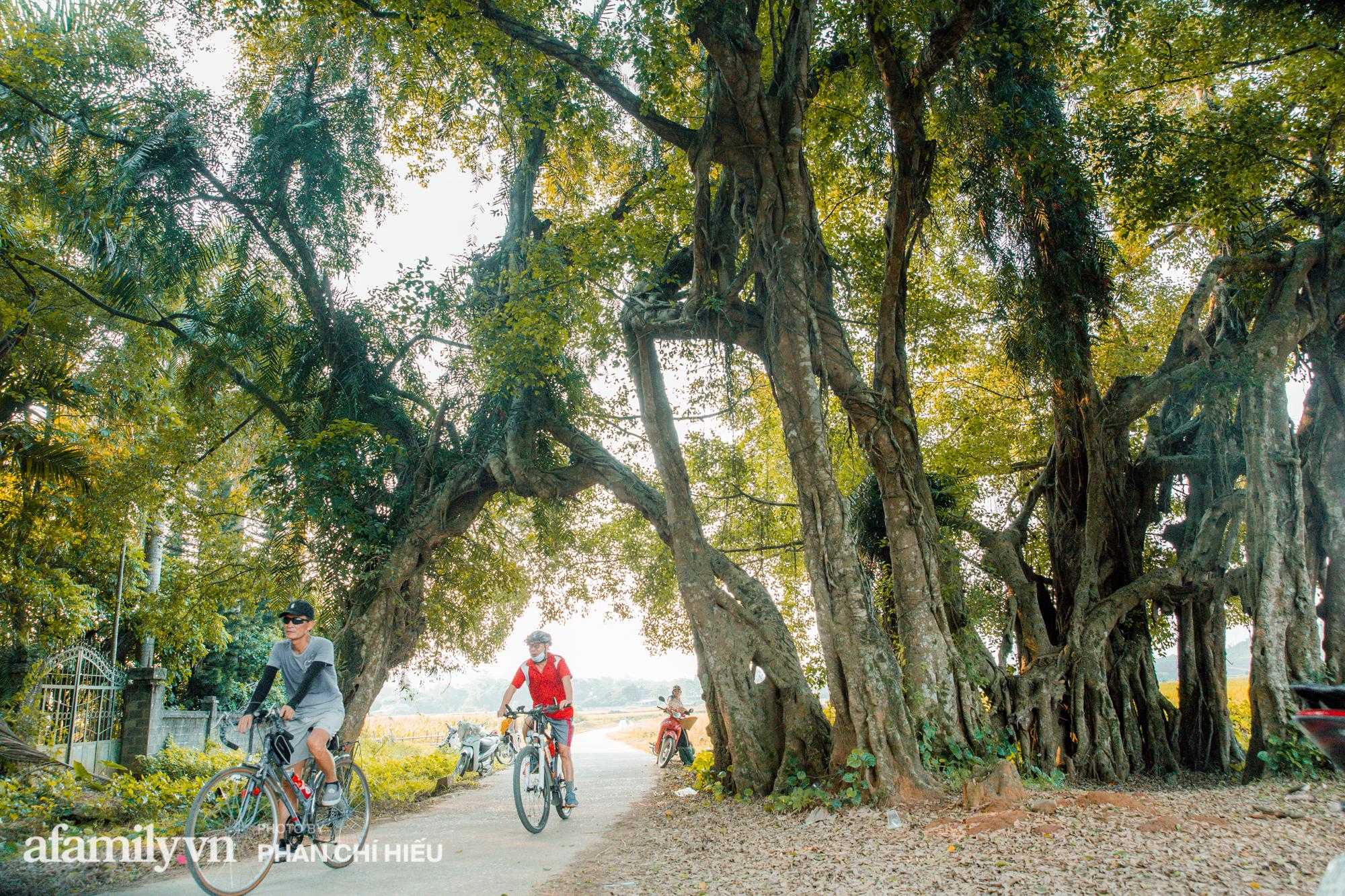 Ngôi làng độc nhất Việt Nam sở hữu chiếc cổng từ cây đại thu 800 năm tuổi, từng là bối cảnh cực ấn tượng trong những bộ phim về làng quê Việt Nam - Ảnh 1.