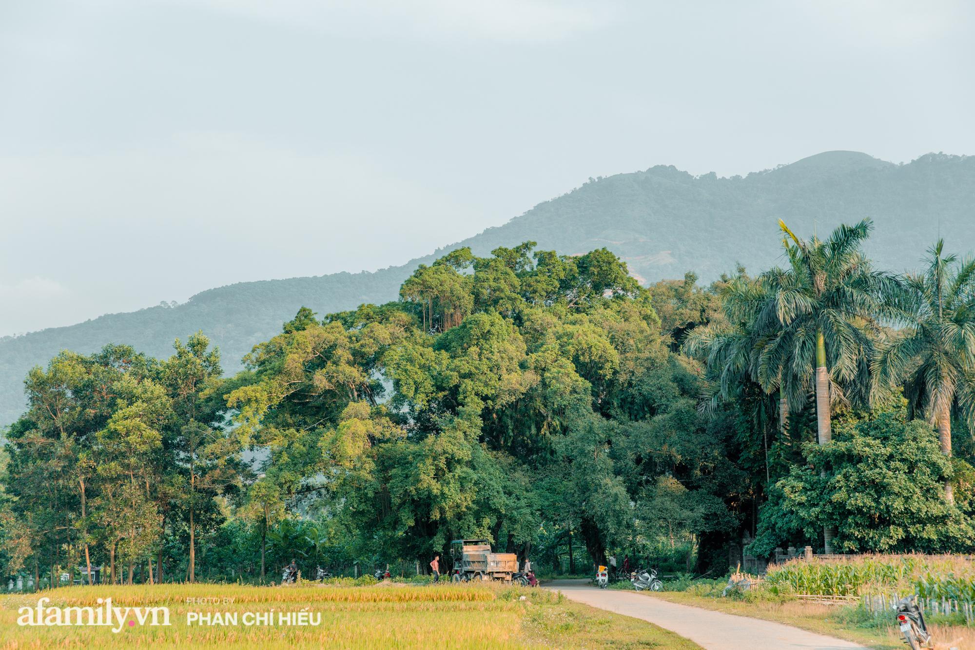 Ngôi làng độc nhất Việt Nam sở hữu chiếc cổng từ cây đại thu 800 năm tuổi, từng là bối cảnh cực ấn tượng trong những bộ phim về làng quê Việt Nam - Ảnh 9.