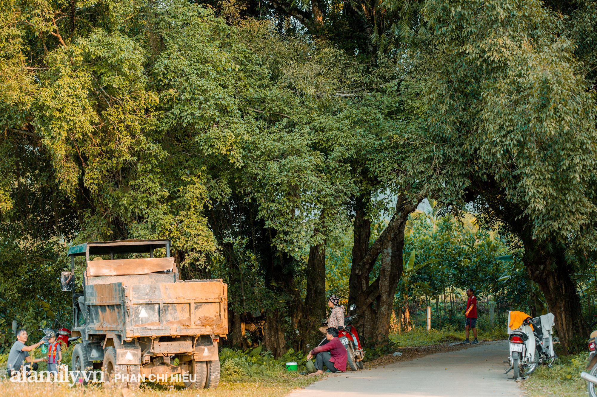 Ngôi làng độc nhất Việt Nam sở hữu chiếc cổng từ cây đại thu 800 năm tuổi, từng là bối cảnh cực ấn tượng trong những bộ phim về làng quê Việt Nam - Ảnh 6.