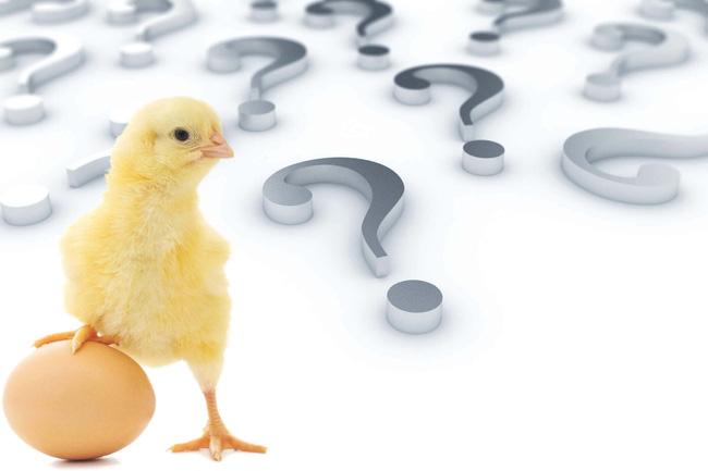 """Con gà hay quả trứng có trước? Câu hỏi """"hack não"""" đã có lời giải, nhưng sao xem dân tình tranh cãi vẫn thấy sai sai thế này? - Ảnh 2."""