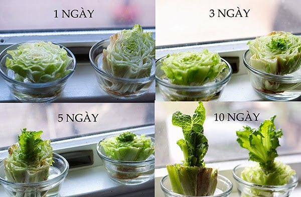 Ở nhà giãn cách mà muốn da đẹp dáng thon, cứ món salad này mà chén chị em ơi! - Ảnh 6.
