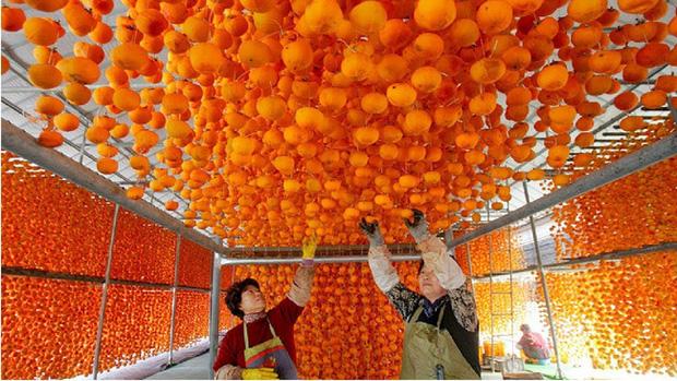 Mỗi độ thu về, nông dân Nhật Bản lại treo hàng nghìn quả hồng lên giàn, tỉ mỉ làm ra đặc sản đắt đỏ mà ngon nuốt lưỡi - Ảnh 2.