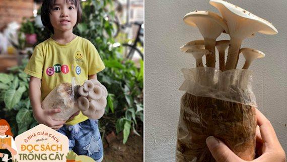 Dân mạng đua nhau trồng nấm sò trắng tại nhà rồi lại thi nhau than thất bại, hãy thử tham khảo cách này xem!