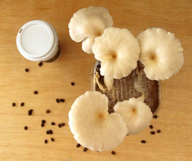 Hóa ra tự trồng nấm ở nhà cực dễ, nguyên liệu cũng đơn giản ai cũng kiếm được - Ảnh 8.