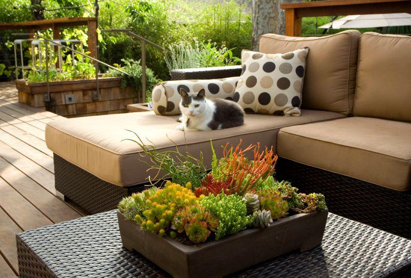 Trang trí nhà với 23 cách trồng cây mọng nước đẹp lạ - Ảnh 6.