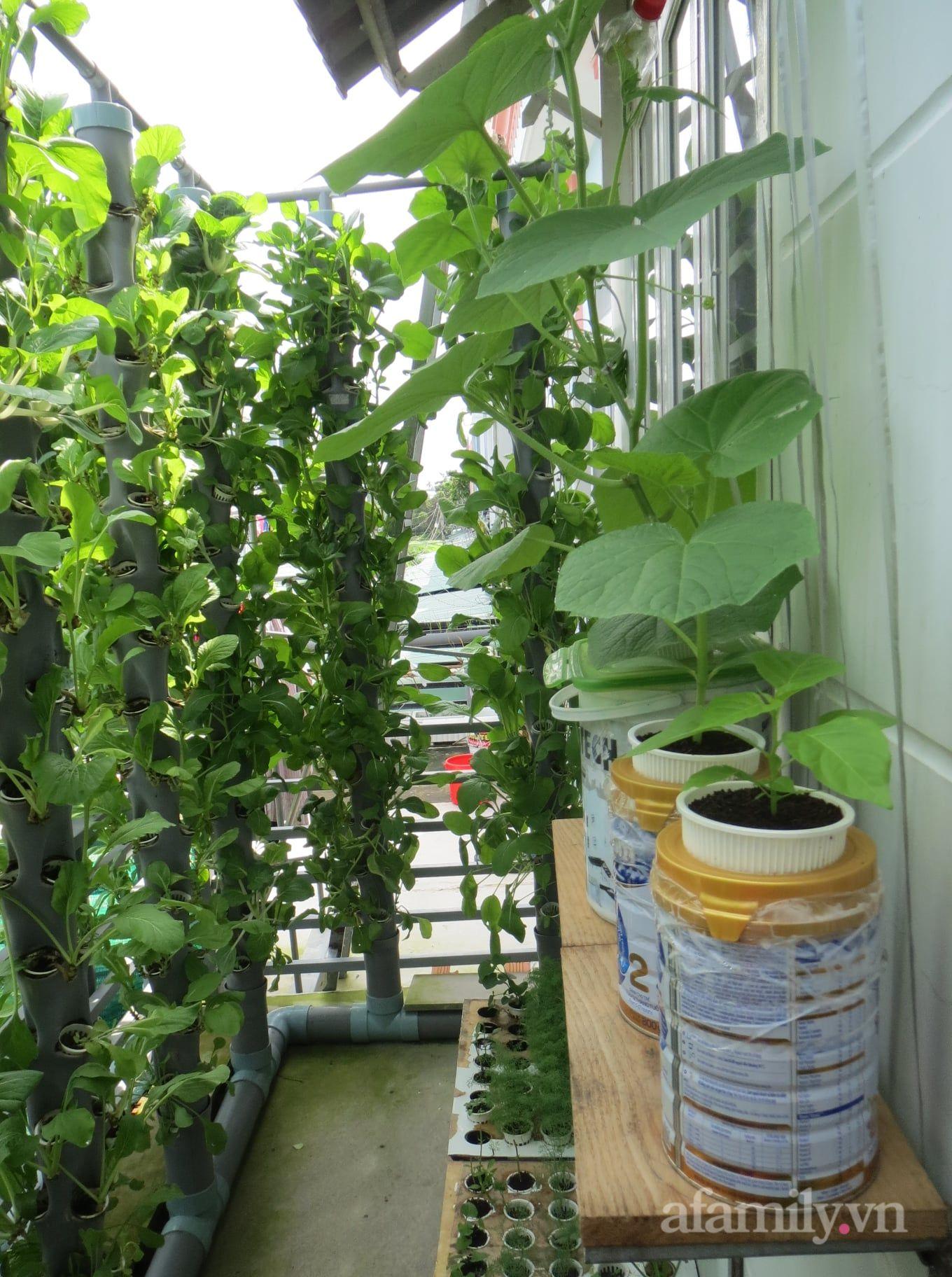 Ban công chỉ 5m² mà trồng đủ loại rau của anh chồng đảm ở Sài Gòn - Ảnh 4.