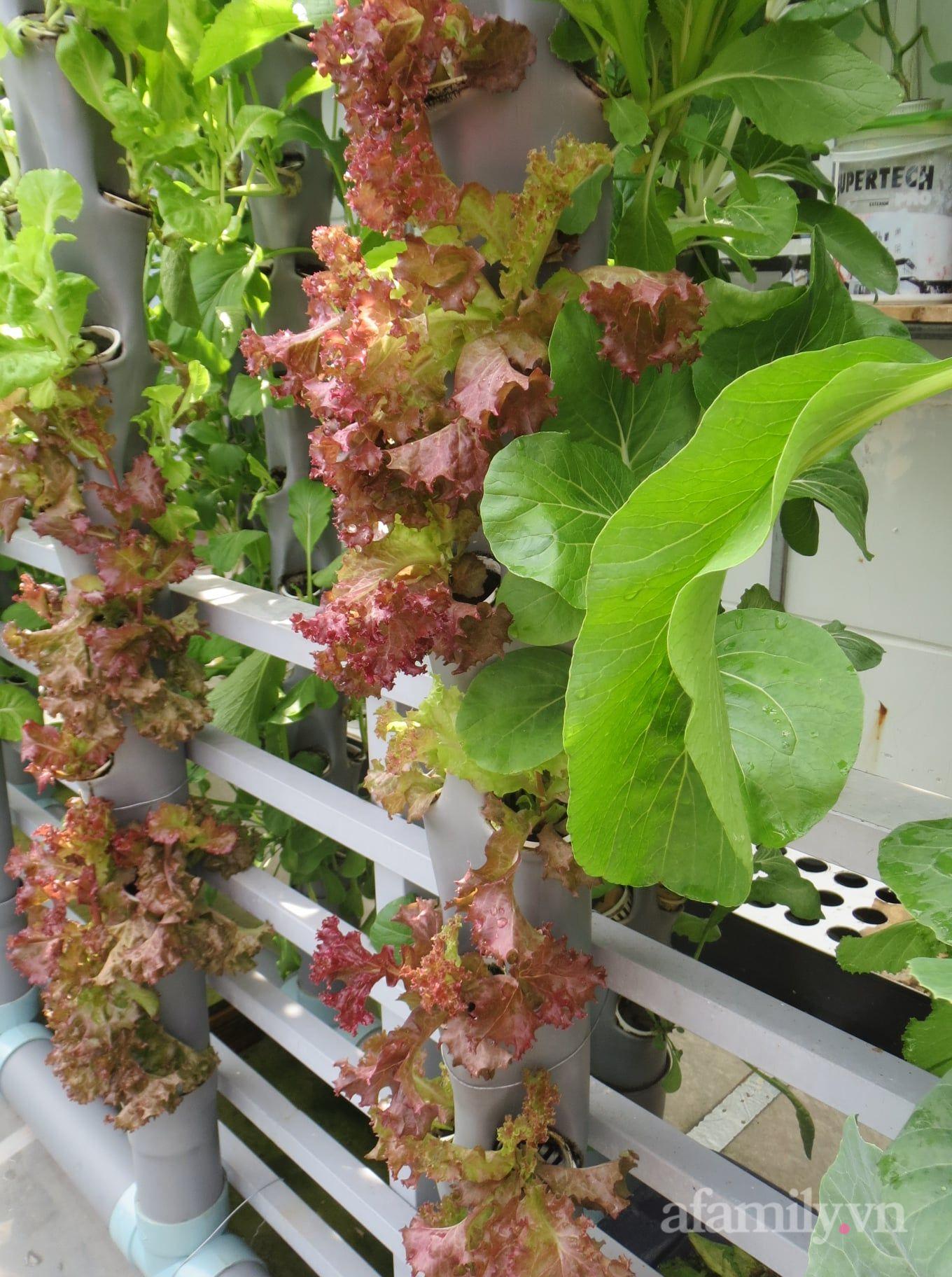 Ban công chỉ 5m² mà trồng đủ loại rau của anh chồng đảm ở Sài Gòn - Ảnh 6.