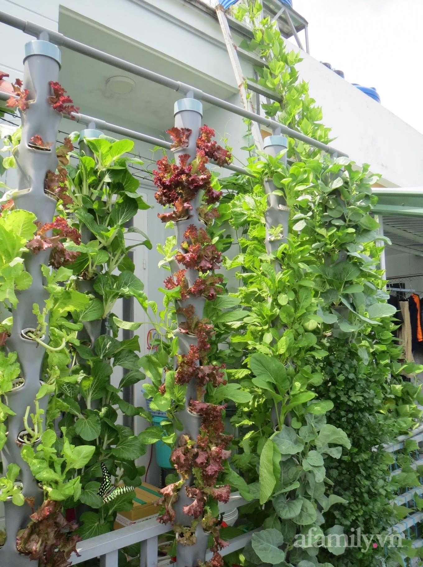 Ban công chỉ 5m² mà trồng đủ loại rau của anh chồng đảm ở Sài Gòn - Ảnh 3.