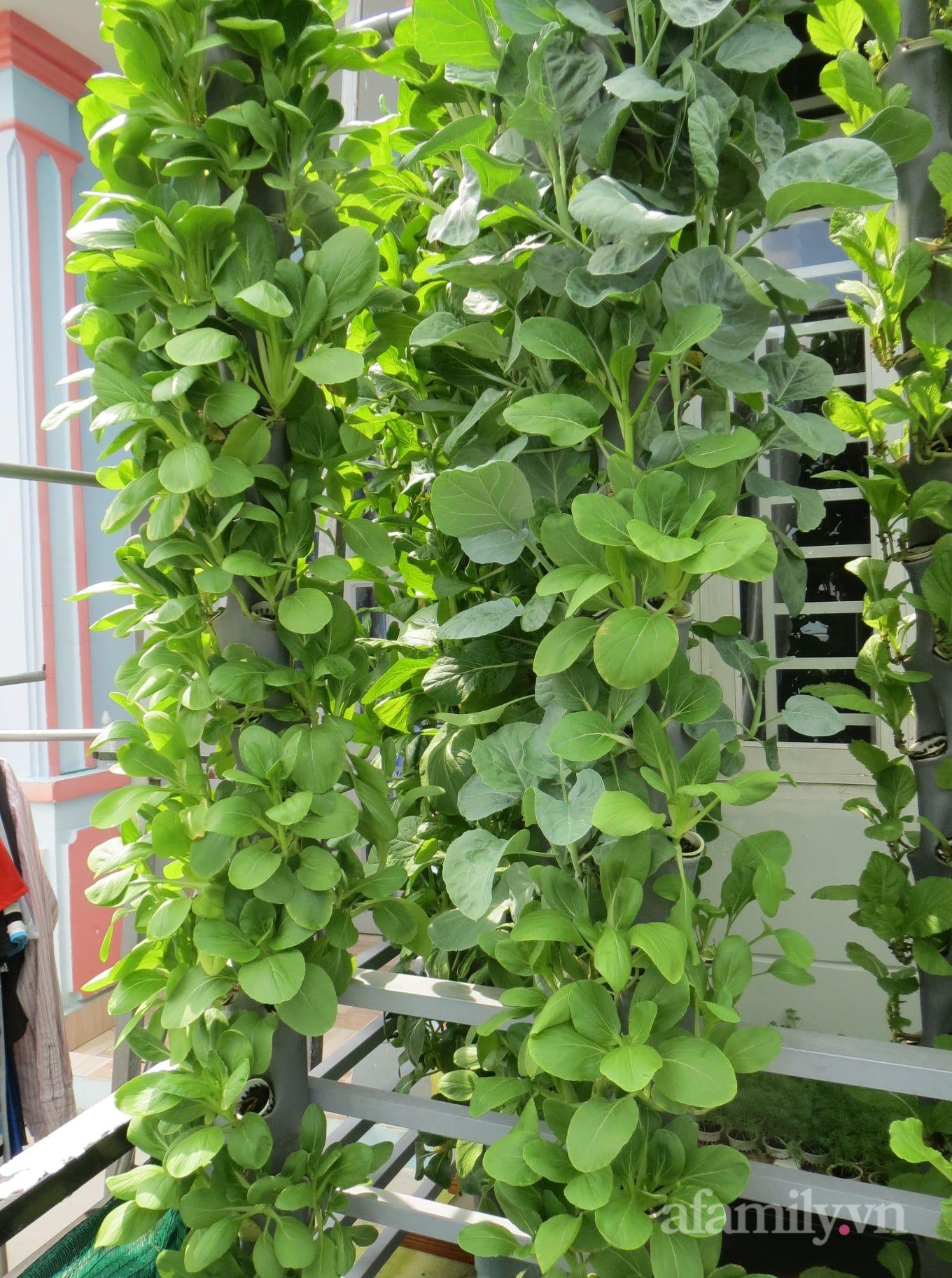 Ban công chỉ 5m² mà trồng đủ loại rau của anh chồng đảm ở Sài Gòn - Ảnh 7.